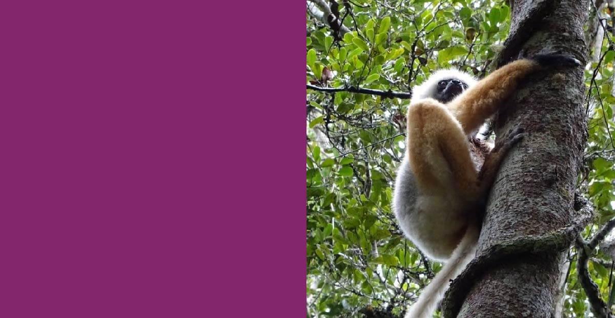 Grown for Good environment; photo of lemur