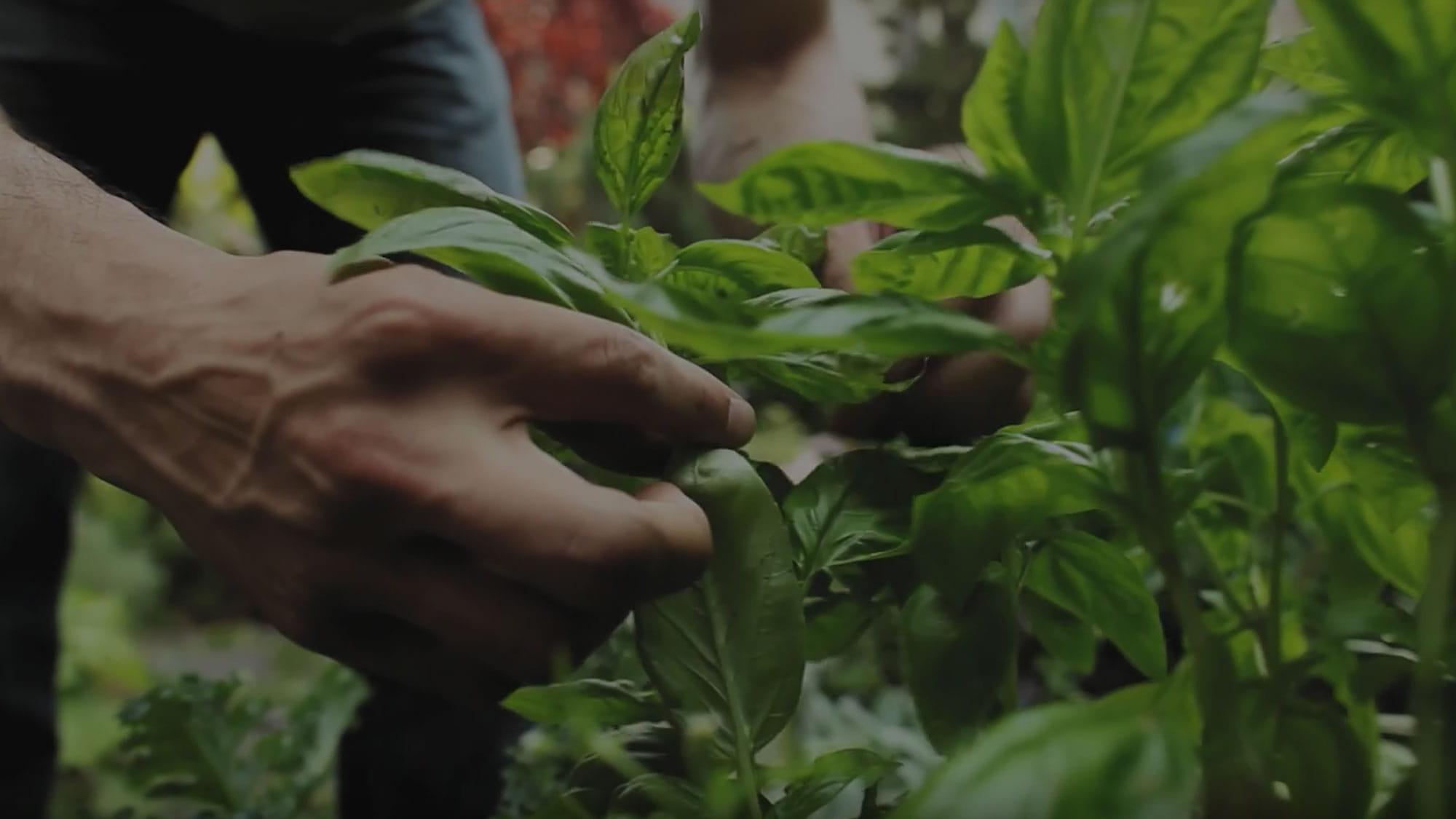 Descubra as nossas ervas e especiarias