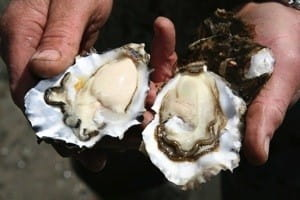 Oysters can be served with a variety of herbs such as parsley black pepper and sea salt