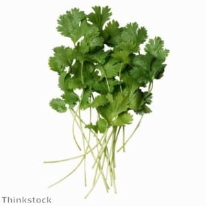 Coriander is perfect with tongue