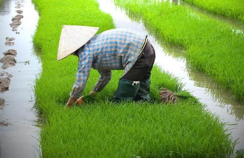 McCormick Pledges Support To More Smallholder Farmers