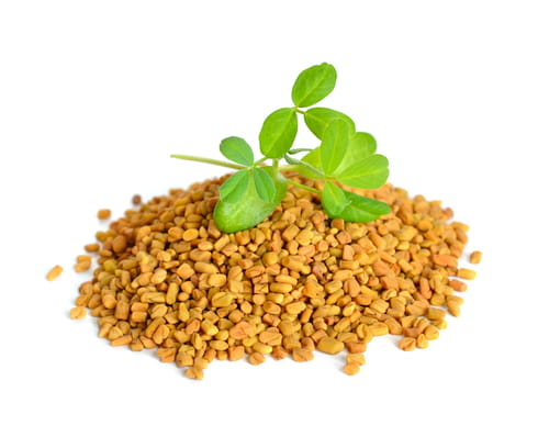 MSI Funded Paper: Fenugreek: Overview of Potential Health Benefits