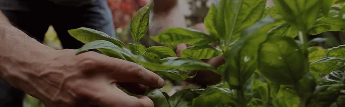 herbs_purity
