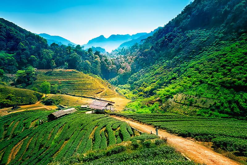 Grossartige Berglandschaft: Chiang Mai